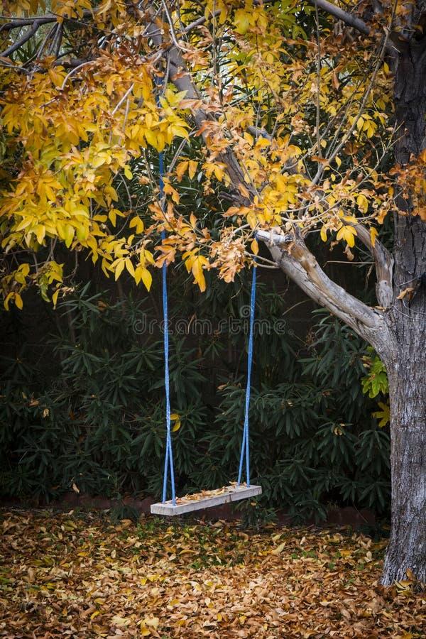 Swing under autumn tree stock image