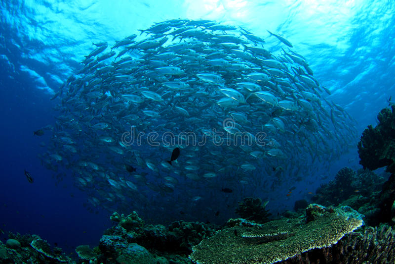Swirl of fish stock photos