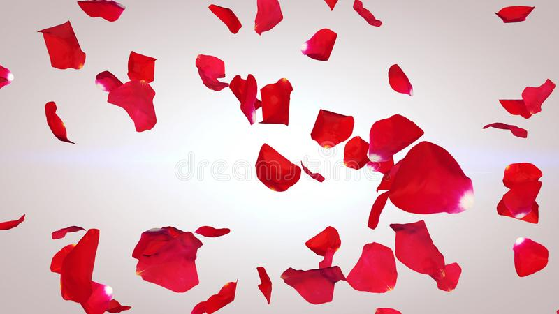 Swirling Petals of Red Roses stock photos
