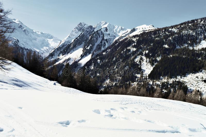 Swiss Alps and forests. Forests under the snow and great summits in Swiss Alps, which are high peaks, famous and famous range of mountains in Switzerland royalty free stock image
