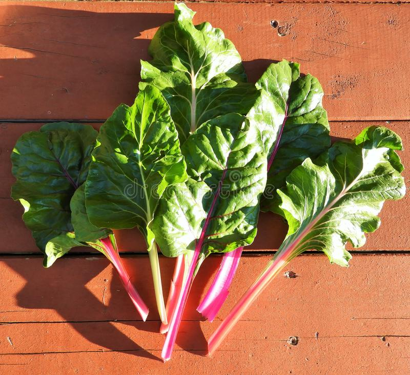 Swiss Chard Leaves Free Public Domain Cc0 Image