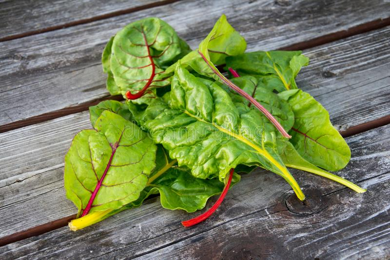 Swiss chard rainbow over wood table. Rustic royalty free stock photo