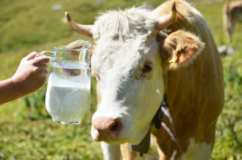 Swiss cow and milk. Swiss cow and jug of milk stock photos