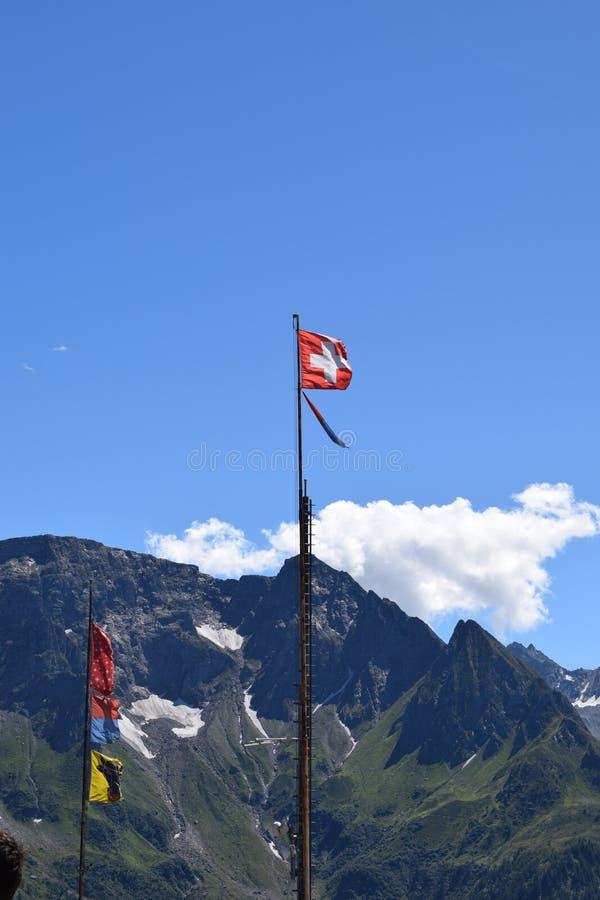 Swiss_Flag royalty free stock photo