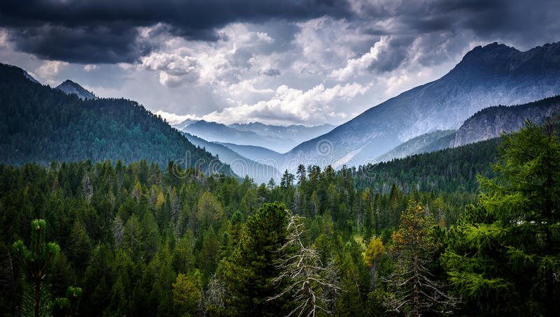 Swiss forest stock photos