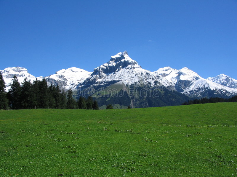 Swiss grass field and mountain stock image