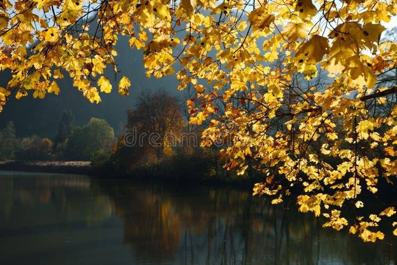 Swiss Lace de Lucelle in einem goldenen Rahmen des Herbstlaubs stockbild