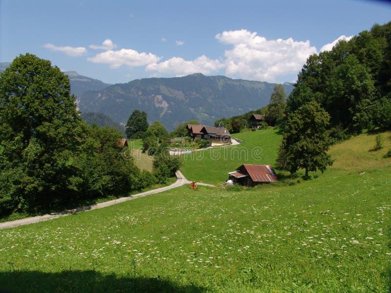 Swiss Summer Pastoral Scene royalty free stock photos