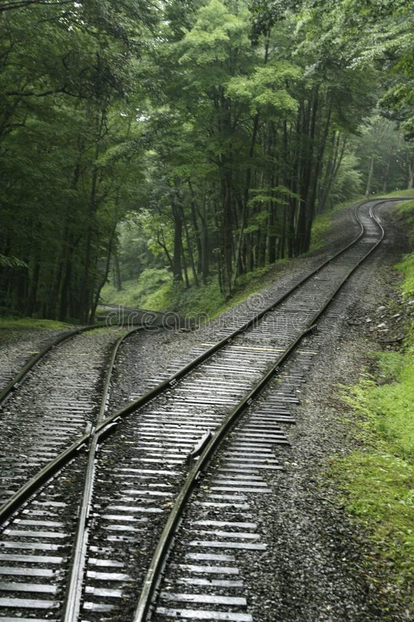 Switchbackdrevspår i skogen royaltyfri foto