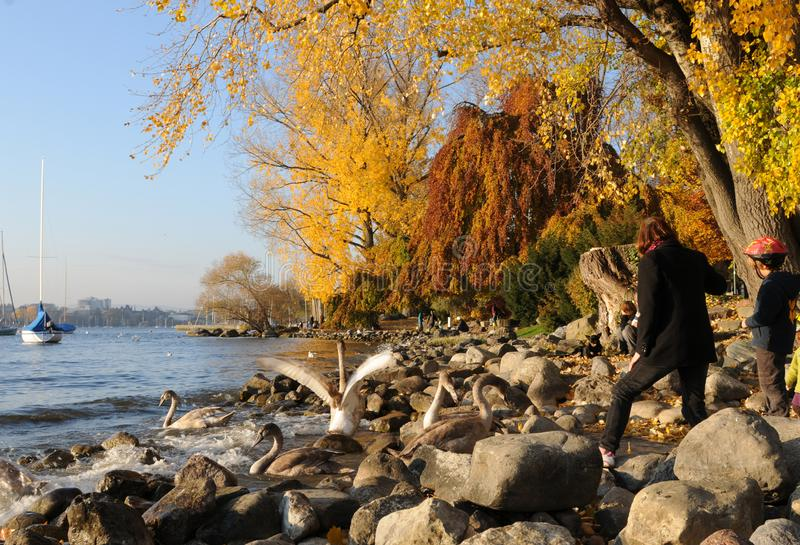 Switzerland: autumn colors at Lake Zürich in Seefeld royalty free stock photo