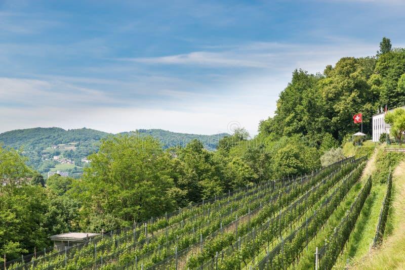 switzerland winnica zdjęcie royalty free