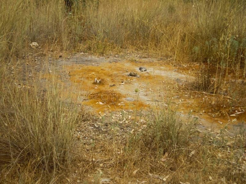 Swollen soil due to  growth. Abnormal phenomena in the soil. Swollen soil due to fungal growth. Abnormal phenomena in the soil royalty free stock photos