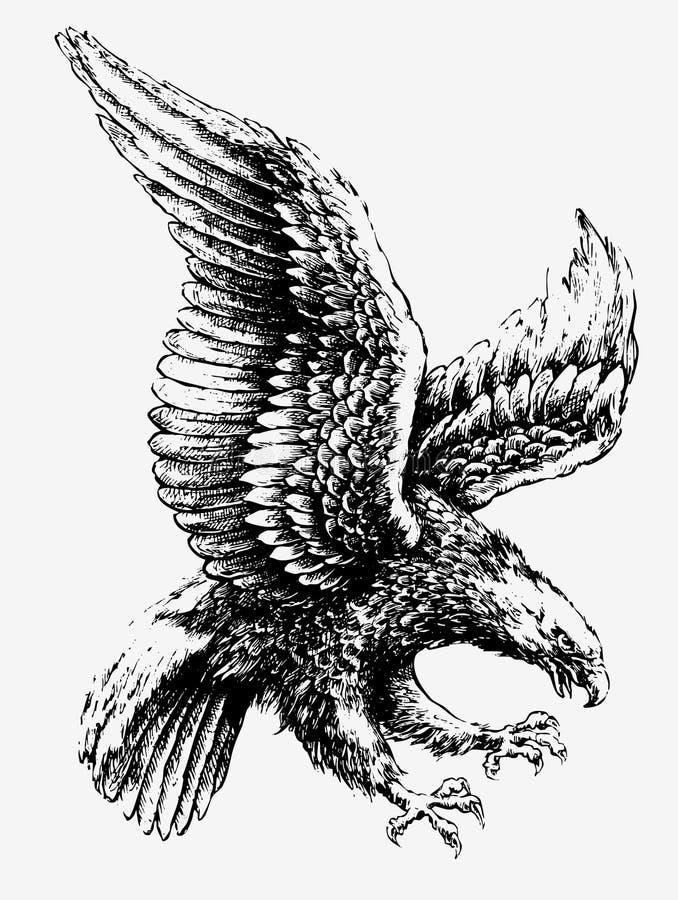 Swooping орел