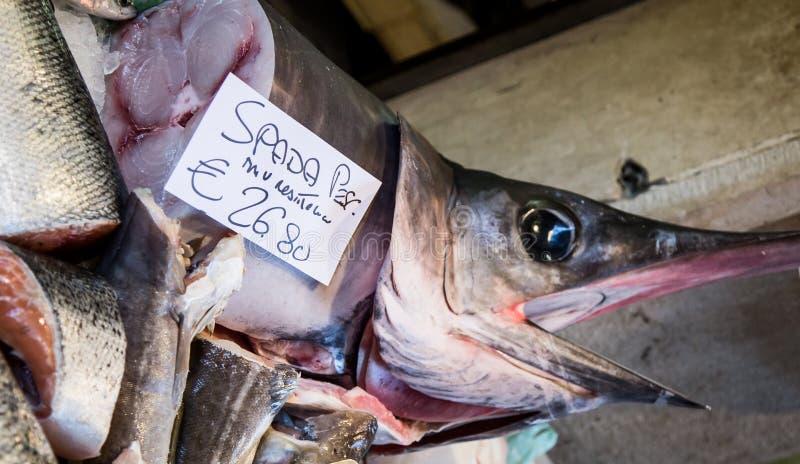 swordfish royaltyfri foto