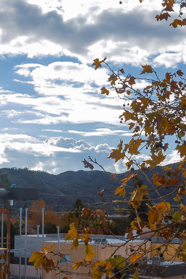 Sycamore tree in fall with city building, mountains and clouds stock image