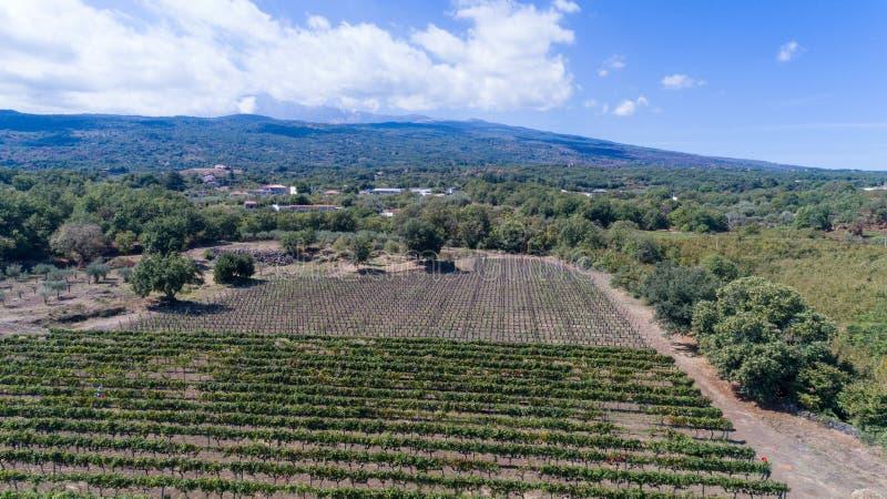 Sycylijczyk ziemia z winogronami dla gronowego żniwa obrazy royalty free