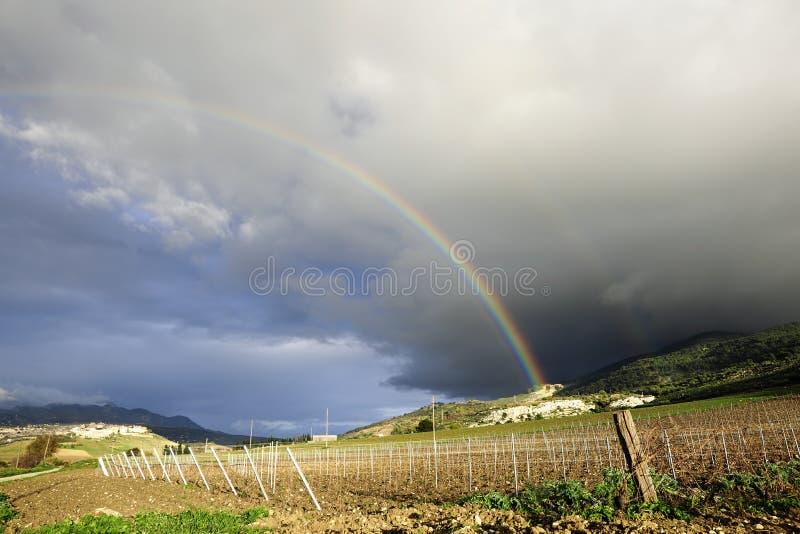 Sycylijski zima winnicy krajobraz fotografia stock