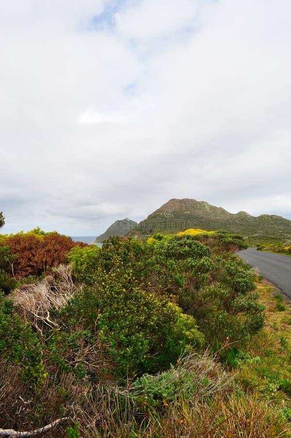 Sydafrika västra udde, uddehalvö royaltyfria foton