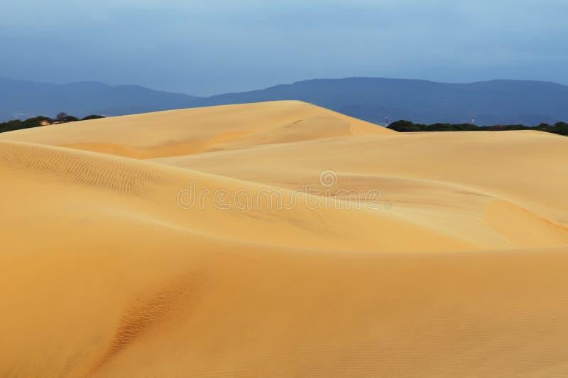 Sydamerika sanddyn i Venezuela nära staden av Coro royaltyfri fotografi