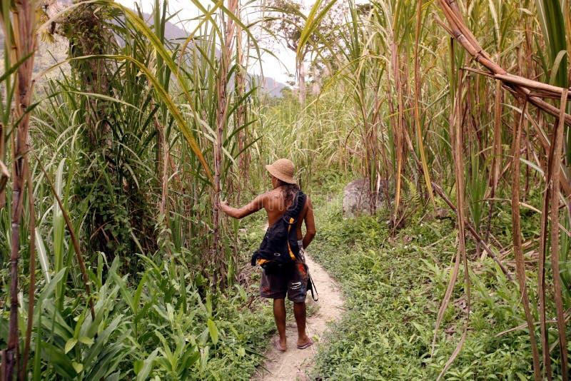SYDAMERIKA VENEZUELA CHORONI NATUR, SKOG fotografering för bildbyråer