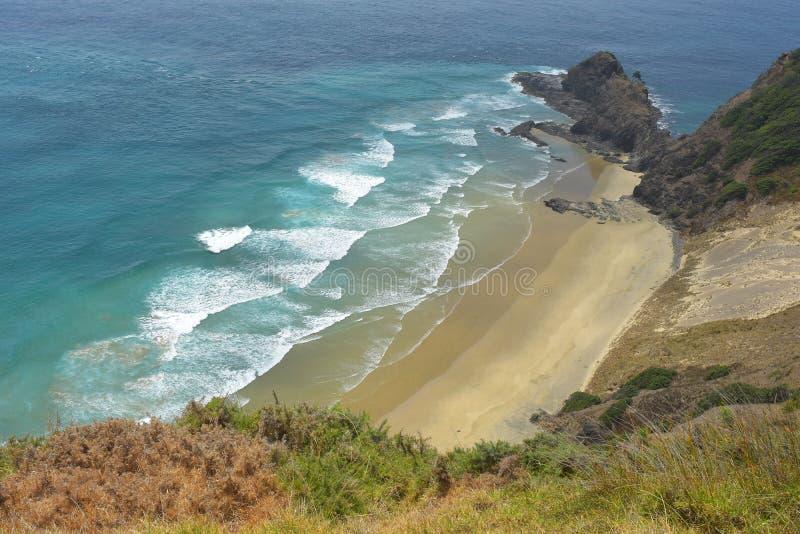 Sydlig Stillahavs- strand royaltyfri bild