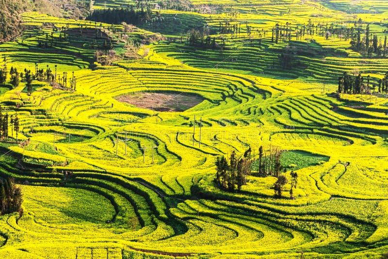Sydliga Kina i vår royaltyfri fotografi