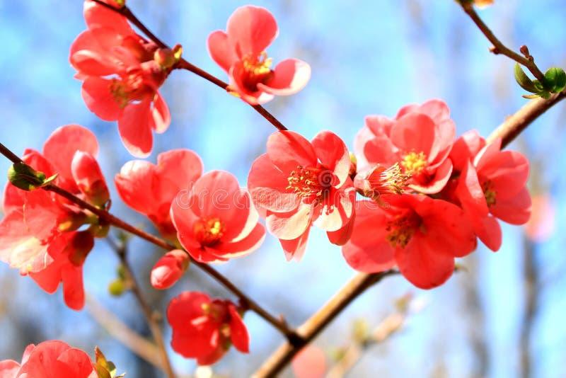 Sydliga spanska röda blommor mot den blåa vårhimlen arkivbilder