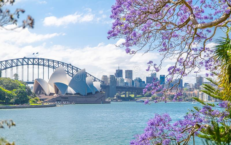 The view of Opera house from royal botanic garden with Jacaranda mimosifolia flower in the spring season. royalty free stock photos