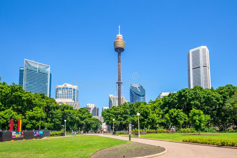 Sydney tower and hyde park royalty free stock photo