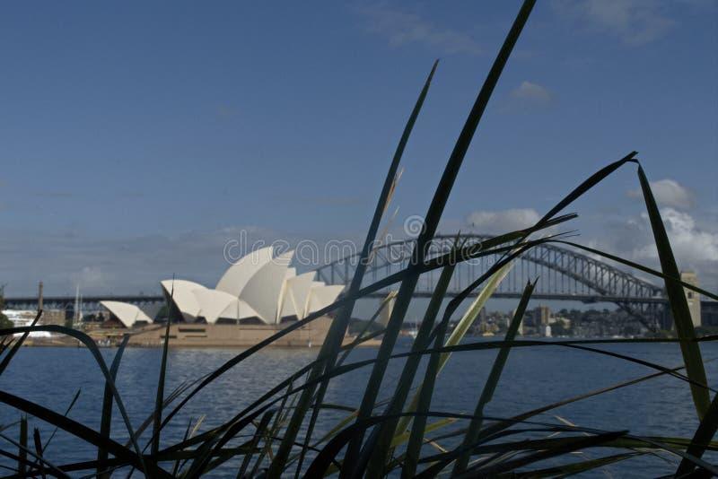 Sydney Australien - mars 2019: Botaniska trädgårdar på Sydney med den hamnbron och operahuset i bakgrund arkivfoton