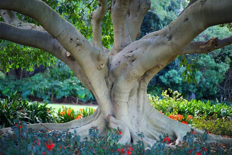Sydney Botanical Gardens stock foto's