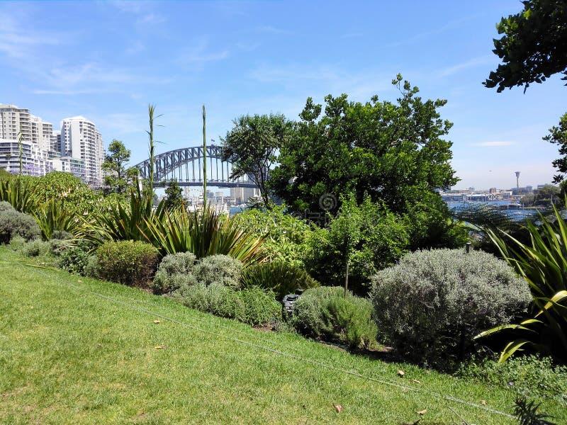 Sydney tajny ogród zdjęcia royalty free