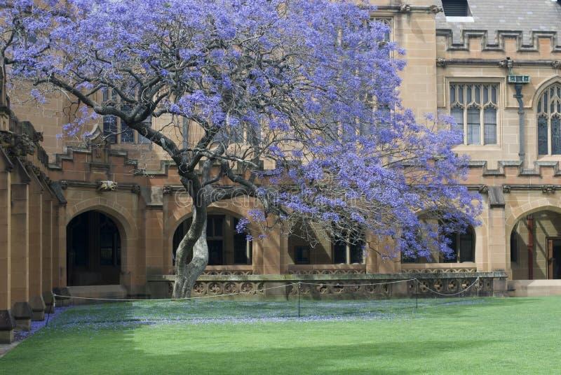 Sydney University Quadrangle royalty free stock photos
