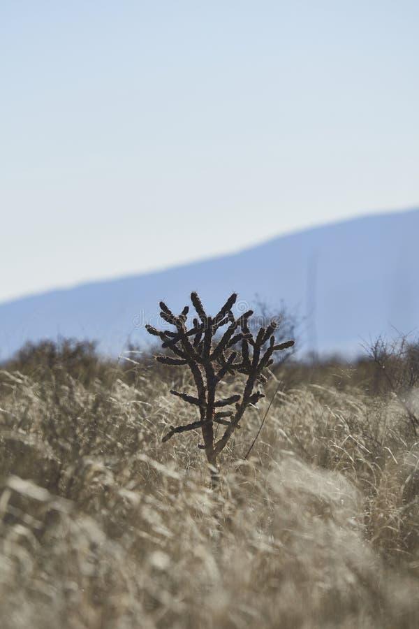 Sydvästökenlandskap fotografering för bildbyråer