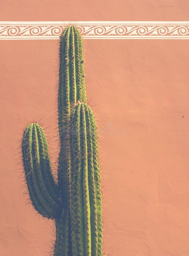 Sydvästlig USA kaktusdetalj royaltyfri foto