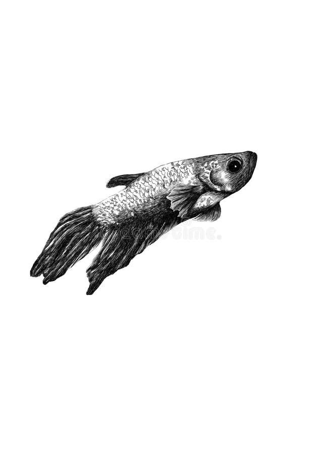 Syjamski bój ryba rysunek zdjęcia stock