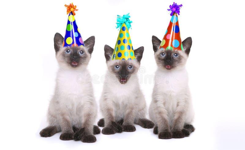 Syjamskie figlarki Świętuje urodziny Z kapeluszami obrazy royalty free