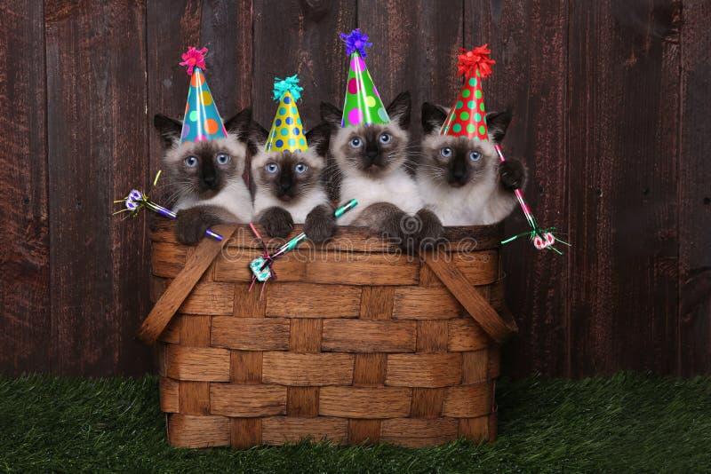 Syjamskie figlarki Świętuje urodziny Z kapeluszami obraz stock