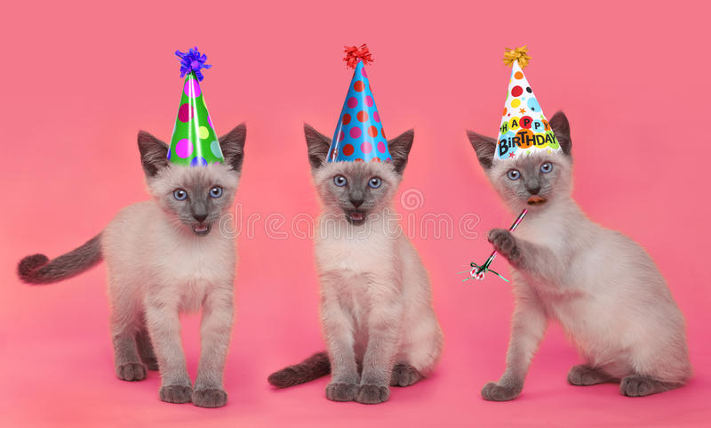 Syjamskie figlarki Świętuje urodziny Z kapeluszami zdjęcia royalty free