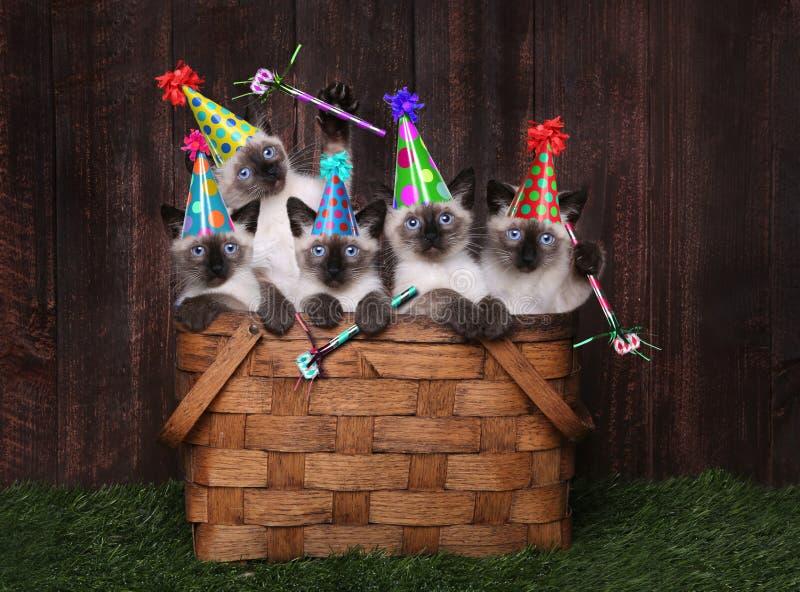 Syjamskie figlarki Świętuje urodziny Z kapeluszami obraz royalty free