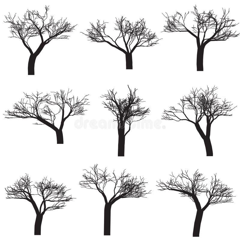 sylwetek drzewa ilustracji