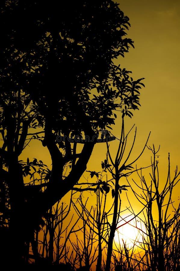Sylwetek drzewa z zmierzchem zdjęcie stock