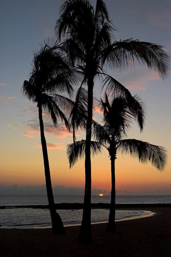 Sylwetek kokosowi drzewka palmowe na plaży przy zmierzchem na wyspie o zdjęcia royalty free