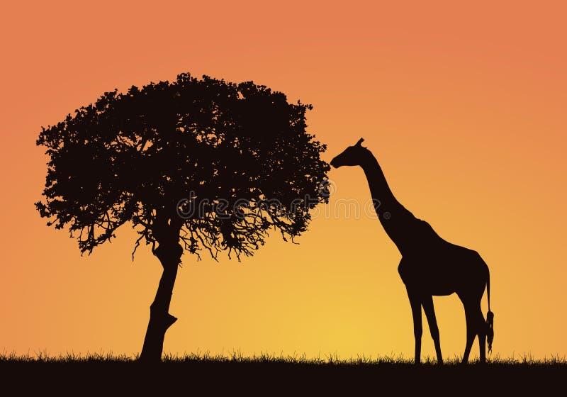 Sylwetka żyrafa, trawa i drzewo w Afrykańskim safari krajobrazie, Pomarańczowy niebo z przestrzenią dla teksta, wektor ilustracja wektor