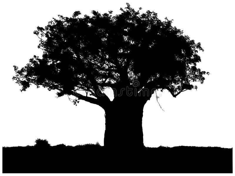 Sylwetka baobab royalty ilustracja