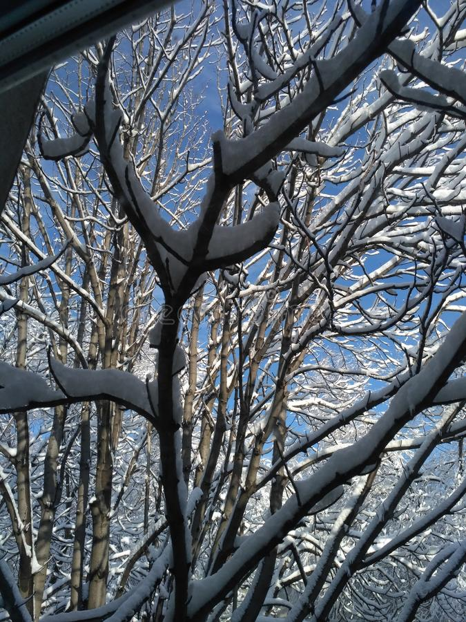 Sylwetka befringed z śniegiem drzewo obrazy stock