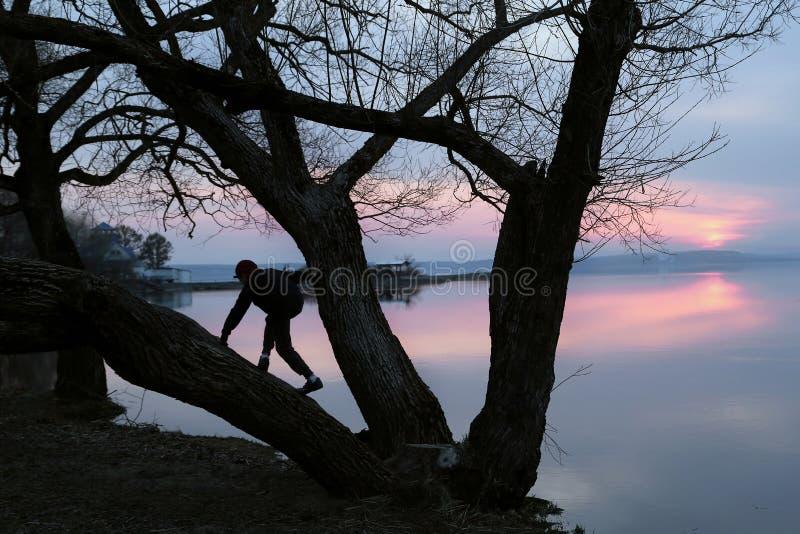 Sylwetka chłopiec która wspina się na drzewie zdjęcia royalty free