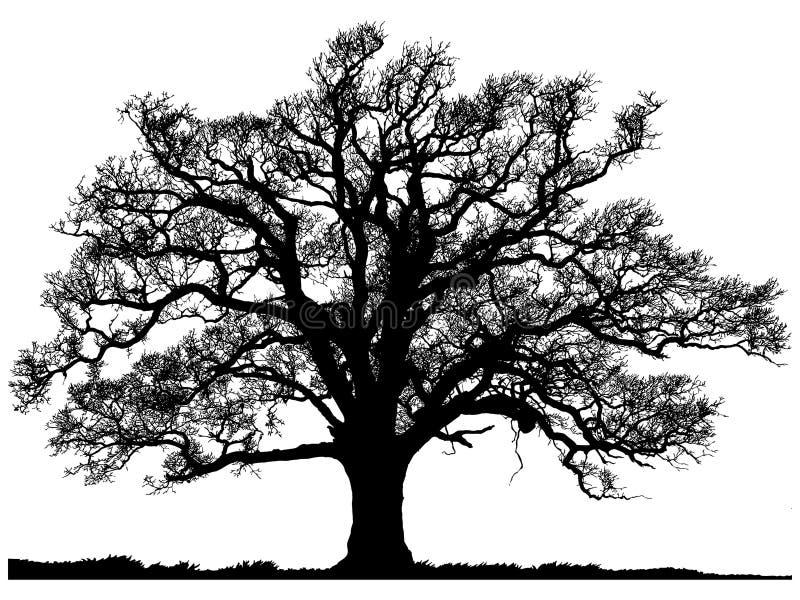 Sylwetka dębowy drzewo royalty ilustracja