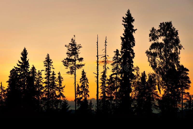 Sylwetka drzewa obrazy royalty free