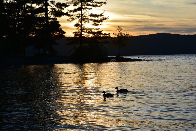 Sylwetka drzewa, góry i kaczki na jeziorze, zdjęcie royalty free